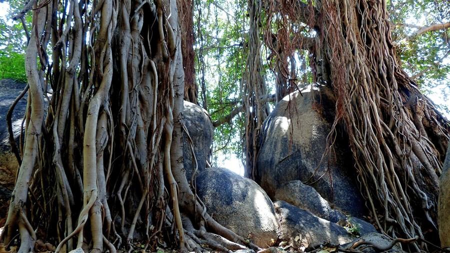Vegetation et Faune 00134