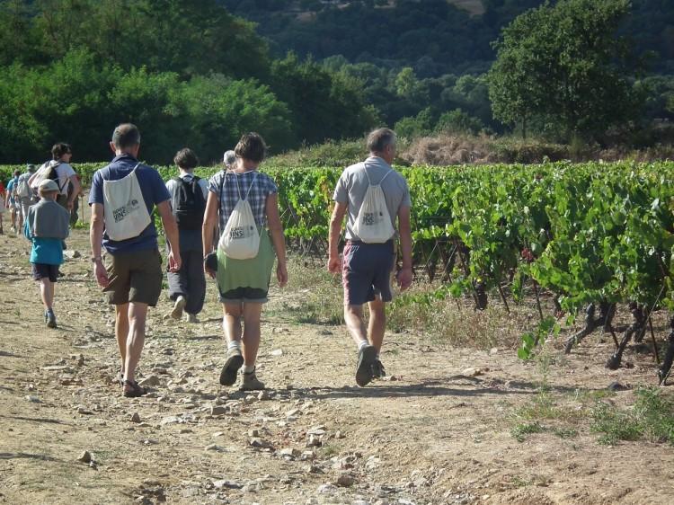 randonnee vigne vin rando varenne 49  2
