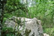 http://www.waibe.fr/sites/lesgenets/medias/images/__HIDDEN__galerie_94/Sortie_au_Bois_de_Paiolive_31-05-2017_023.JPG