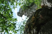 http://www.waibe.fr/sites/lesgenets/medias/images/__HIDDEN__galerie_94/Sortie_au_Bois_de_Paiolive_31-05-2017_027.JPG
