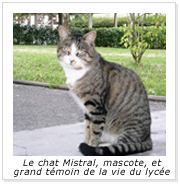 img chat
