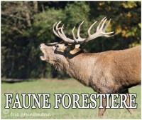 FAUNE FORESTIERE 2