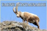 FAUNE MONTAGNE