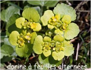http://www.waibe.fr/sites/photoeg/medias/images/FLORE/dorine_01b.jpg