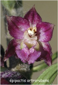 http://www.waibe.fr/sites/photoeg/medias/images/FLORE/z-orchidee__2_.jpg