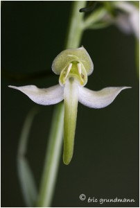 http://www.waibe.fr/sites/photoeg/medias/images/ORCHIDEES/orchidees__25_.jpg