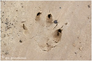 http://www.waibe.fr/sites/photoeg/medias/images/TRACES/traces_013_copie.jpg