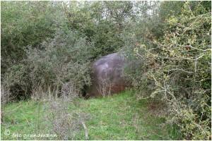 http://www.waibe.fr/sites/photoeg/medias/images/__HIDDEN__galerie_34/MAGINOT_074.jpg