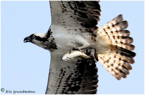 http://www.waibe.fr/sites/photoeg/medias/images/new_nature/balbu_20x30_site_01.jpg