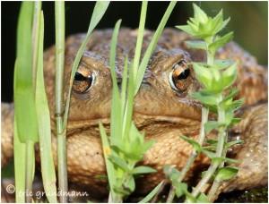http://www.waibe.fr/sites/photoeg/medias/images/new_nature/crapo_cache_01.jpg
