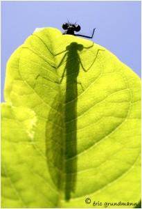 http://www.waibe.fr/sites/photoeg/medias/images/new_nature/ombre.jpg