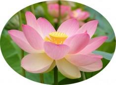 img srchttpwww.spiritualiteetyoga.com image.jpg altFleur 2