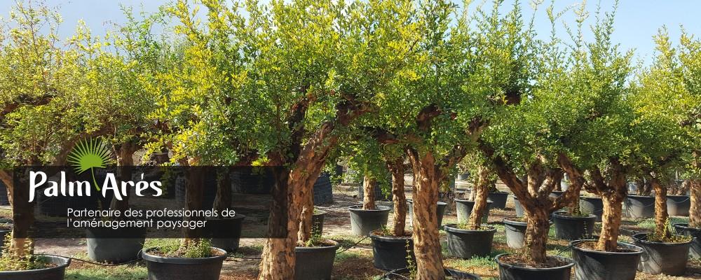 fourniture plantes andernos
