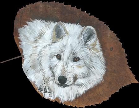 13.Loup blanc tilleul