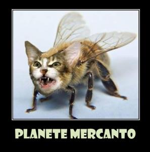 chat abeille 2