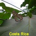 2CR 001 160 Sarchi Ferme papillons