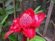 https://www.waibe.fr/sites/micmary/medias/images/Honduras/H-080-Copan-Rose_de_marbre-rose_de_porcelaine_ou_Nicolaia_eliator_.JPG
