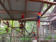 https://www.waibe.fr/sites/micmary/medias/images/Honduras/H-085-Copan-Perroquets.JPG