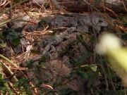 https://www.waibe.fr/sites/micmary/medias/images/Nicaragua/N-165-Volcan_Masaya-Iguane_dans_cavite.JPG