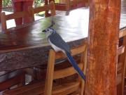 https://www.waibe.fr/sites/micmary/medias/images/Nicaragua/N-215-Ometepe-Villa_Paraiso.JPG
