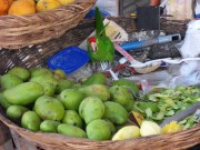 https://www.waibe.fr/sites/micmary/medias/images/Nicaragua/N-425-Leon-Etal.JPG