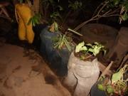 https://www.waibe.fr/sites/micmary/medias/images/Nicaragua/N-500-Esteli-Tisey.JPG