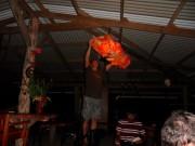 https://www.waibe.fr/sites/micmary/medias/images/Panama/P-200-Bocas-Arrivage_des_tortues.JPG