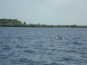 https://www.waibe.fr/sites/micmary/medias/images/Panama/P-215-Bocas-La_queue_du_dauphin_en_plongee.JPG