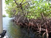 https://www.waibe.fr/sites/micmary/medias/images/Panama/P-255-Bocas-Mangrove.JPG