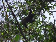 https://www.waibe.fr/sites/micmary/medias/images/Panama/P-265-Bocas-Le_paresseux_mange.JPG