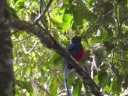 https://www.waibe.fr/sites/micmary/medias/images/Panama/P-295-Boquette-Quetzal.JPG