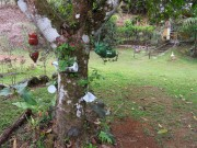 https://www.waibe.fr/sites/micmary/medias/images/Panama/P-370-Chiguiri-jardin_des_Romero.JPG