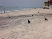 https://www.waibe.fr/sites/micmary/medias/images/Panama/P-415-Farallon-Plus_d__oiseaux_que_de_baignuers.JPG
