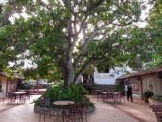 https://www.waibe.fr/sites/micmary/medias/images/Panama/P-440-Panonome-Restaurant_et_son_manguier.JPG