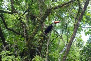 https://www.waibe.fr/sites/micmary/medias/images/__HIDDEN__galerie_50/AR-0240-Arg-Iguazu-Toucan-3529.jpg