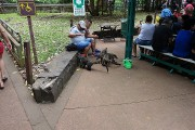 https://www.waibe.fr/sites/micmary/medias/images/__HIDDEN__galerie_50/AR-0250-Arg-Iguazu-Coati-3551.jpg