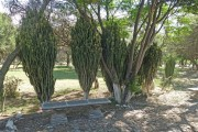 https://www.waibe.fr/sites/micmary/medias/images/__HIDDEN__galerie_53/BO-1310-Cochabamba-Cactus-06325.jpg