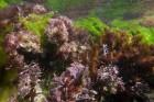 https://www.waibe.fr/sites/ndpd/medias/images/algues/FL00950.jpg