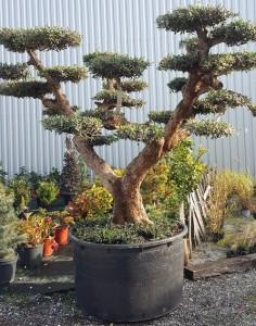https://www.waibe.fr/sites/palmares/medias/images/__HIDDEN__galerie_3/plante-andernos-2.jpg