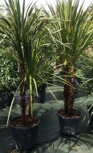 https://www.waibe.fr/sites/palmares/medias/images/__HIDDEN__galerie_3/plante-ares-1.jpg