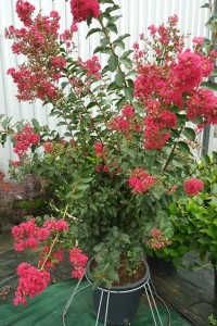 https://www.waibe.fr/sites/palmares/medias/images/__HIDDEN__galerie_3/plante-bassin-arcachon-6.jpg