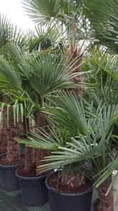 https://www.waibe.fr/sites/palmares/medias/images/__HIDDEN__galerie_3/plante-lanton-5.jpg