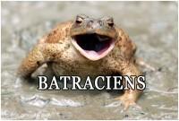 BATRACIENS