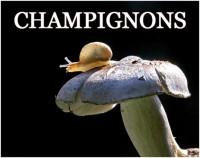 CHAMPIGNONS 5