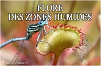 FLORE HUMIDE