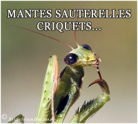 MANTES...