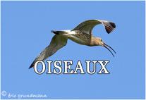 OISEAUX  5X7