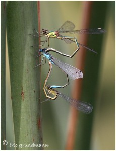 https://www.waibe.fr/sites/photoeg/medias/images/ACCOUPLEMENTS/acc_3_demoiselles_b.jpg