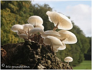 https://www.waibe.fr/sites/photoeg/medias/images/CHAMPIGNONS/champi_04c.jpg