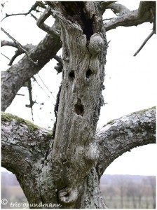https://www.waibe.fr/sites/photoeg/medias/images/__HIDDEN__galerie_1/tete_arbre.jpg